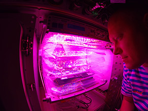 Veggie Plant Growth System Activated on International Space Station