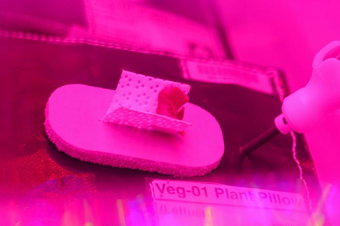 Эксперимент VEG-01. Очередные новости из оранжереи